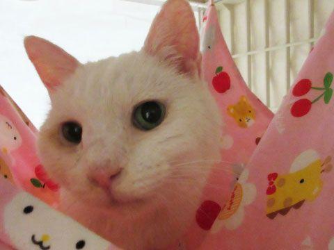 東京キャットガーディアン 里親さんが決まりました